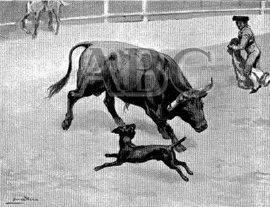 165el-perro-paco04-incordiando-a-un-toro-blyn-24-7-1910